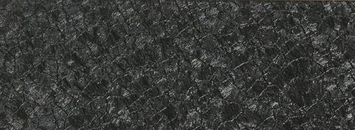 черная ящерица крупная